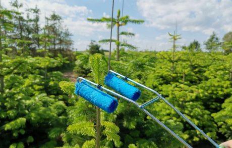 Topskudsregulering mos nature