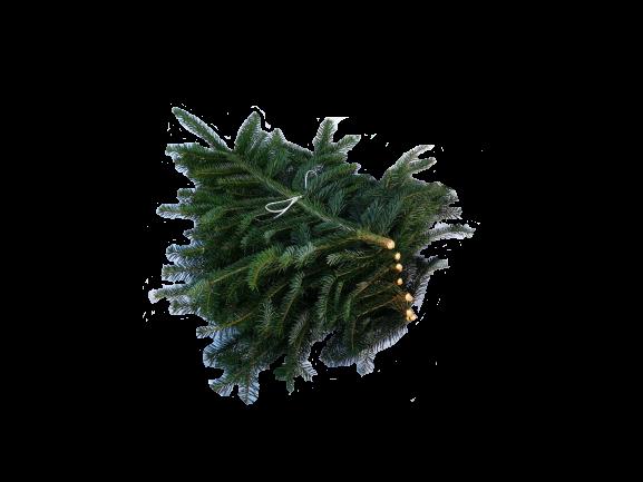 Pyntegrønt nordmannsgran