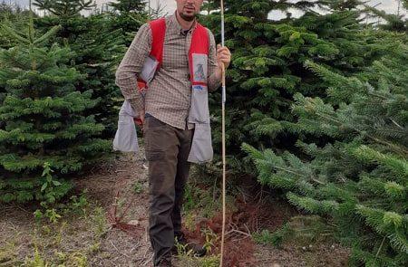 Mærkning af juletræer